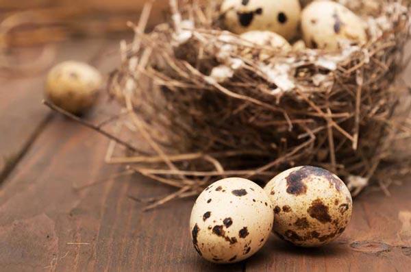 معایب و مضرات تخم بلدرچین برای کودکان